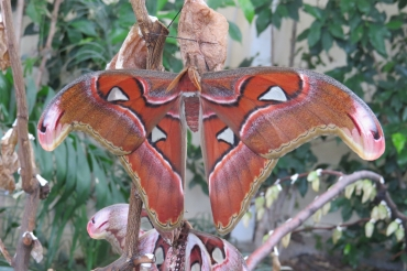 Есенен фестивал на пеперудите започва в Природонаучния музей